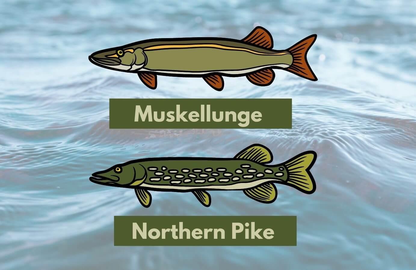 muskie and pike